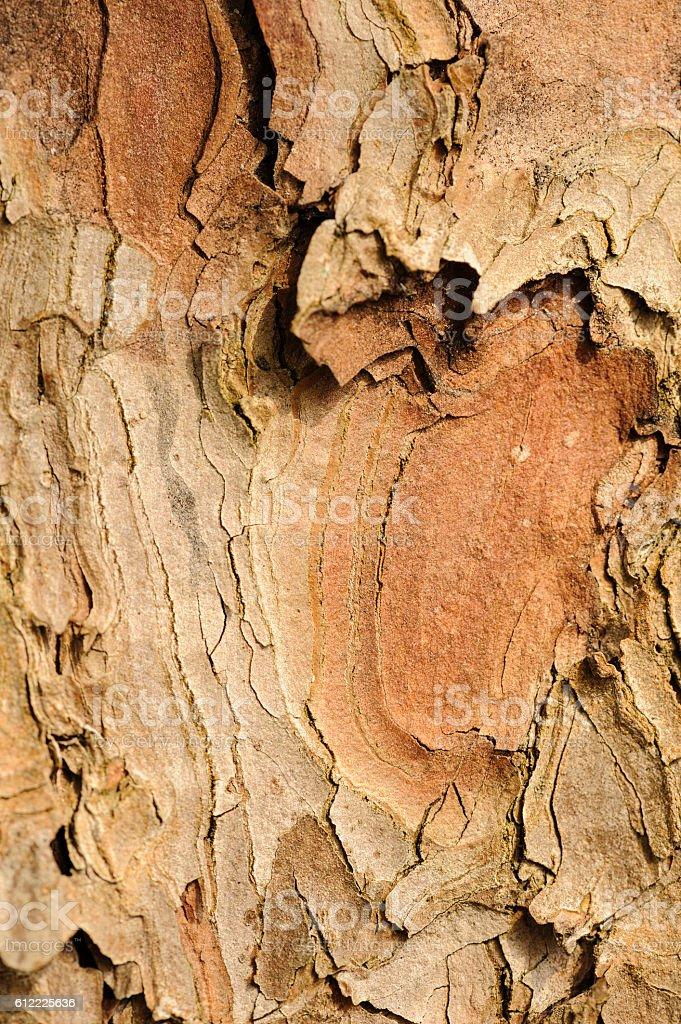 Cracked layered tree trunk stock photo