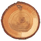 Cracked oak split with bark isolated