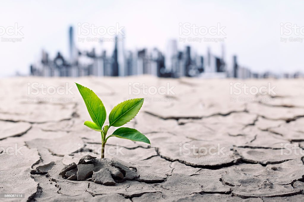Cracked Soil With Little Plant stock photo