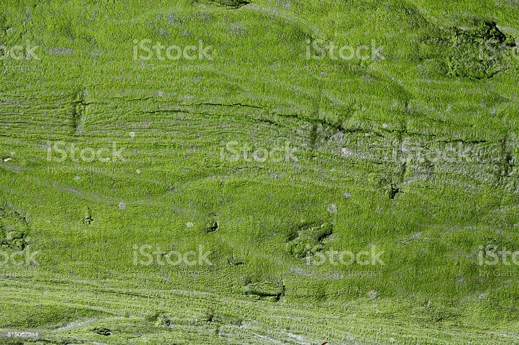 cracked tree bark stock photo
