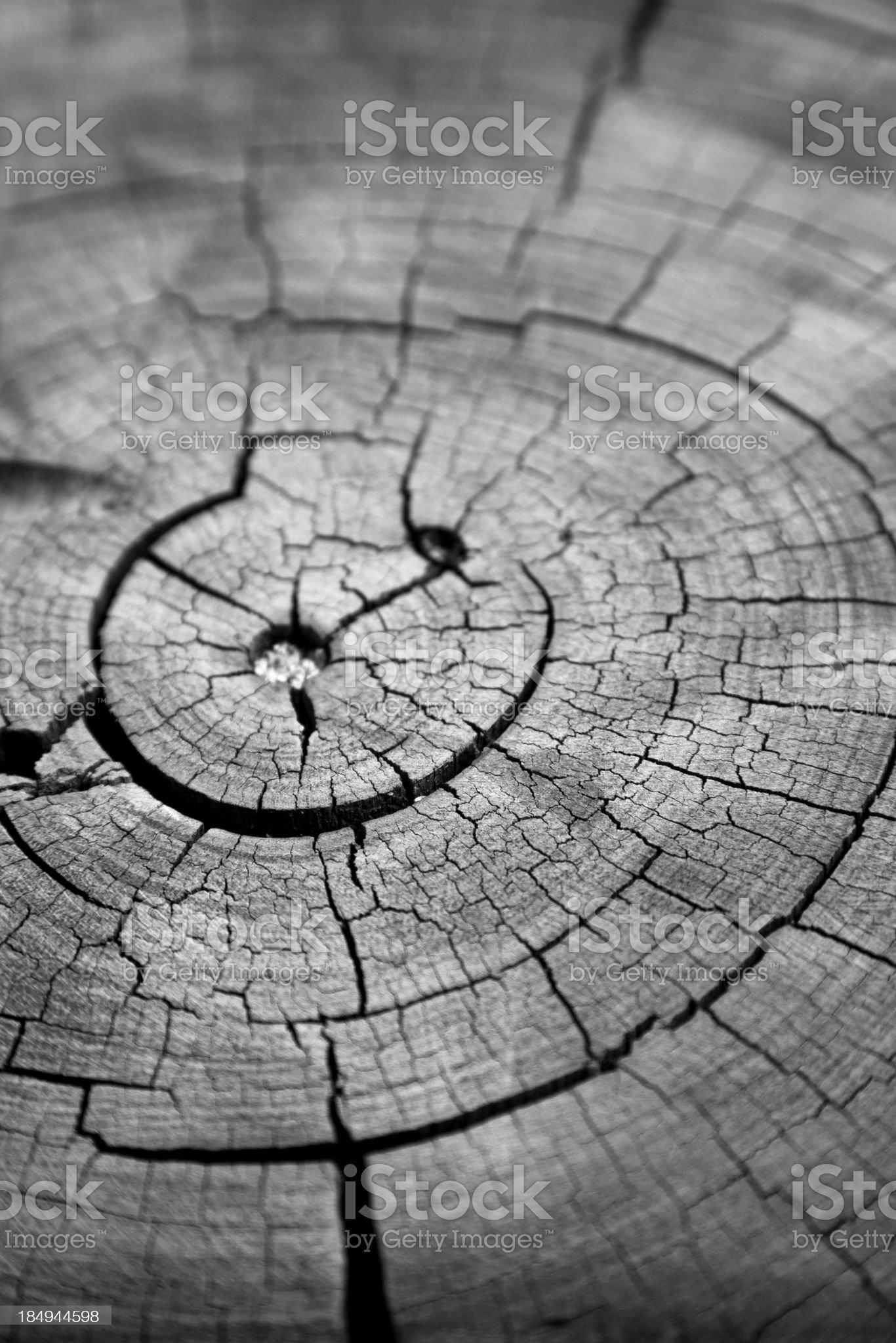 Cracked Tree Rings royalty-free stock photo