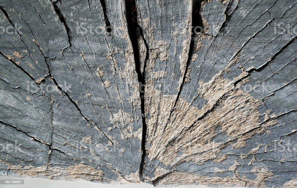 Cracked tree stump background stock photo
