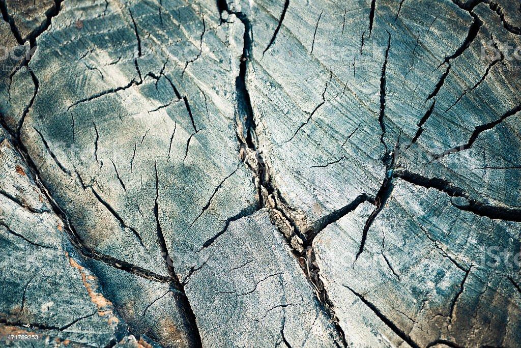 cracked tree texture royalty-free stock photo