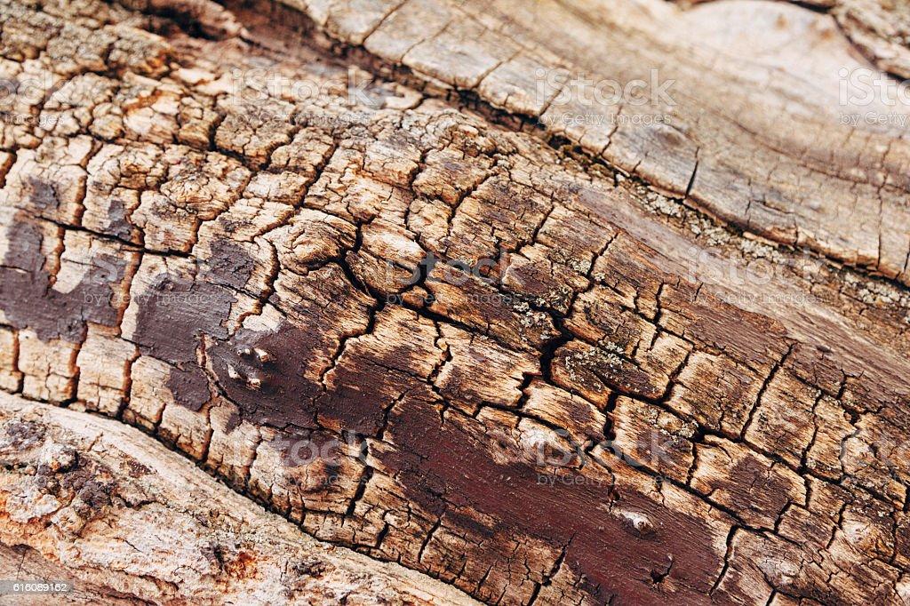 Cracked Wood stock photo