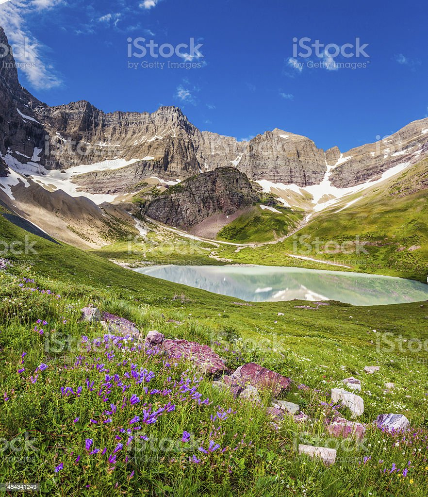 Cracker Lake and wild lilies in Glacier national park, Montana stock photo