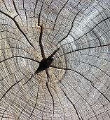 Cracks on the stump