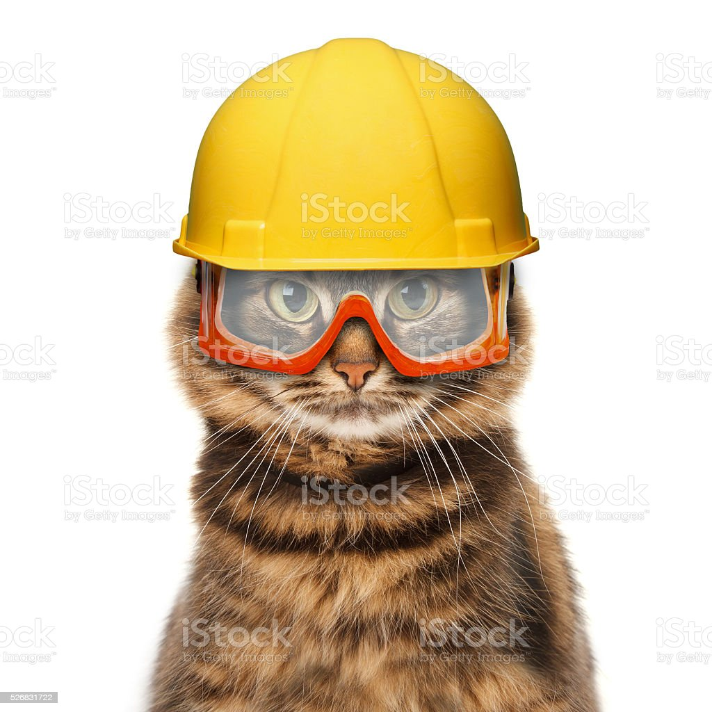 Craftsman cat in helmet stock photo