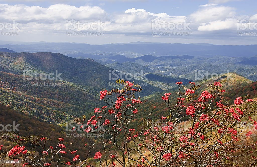 Craggy Gardens royalty-free stock photo