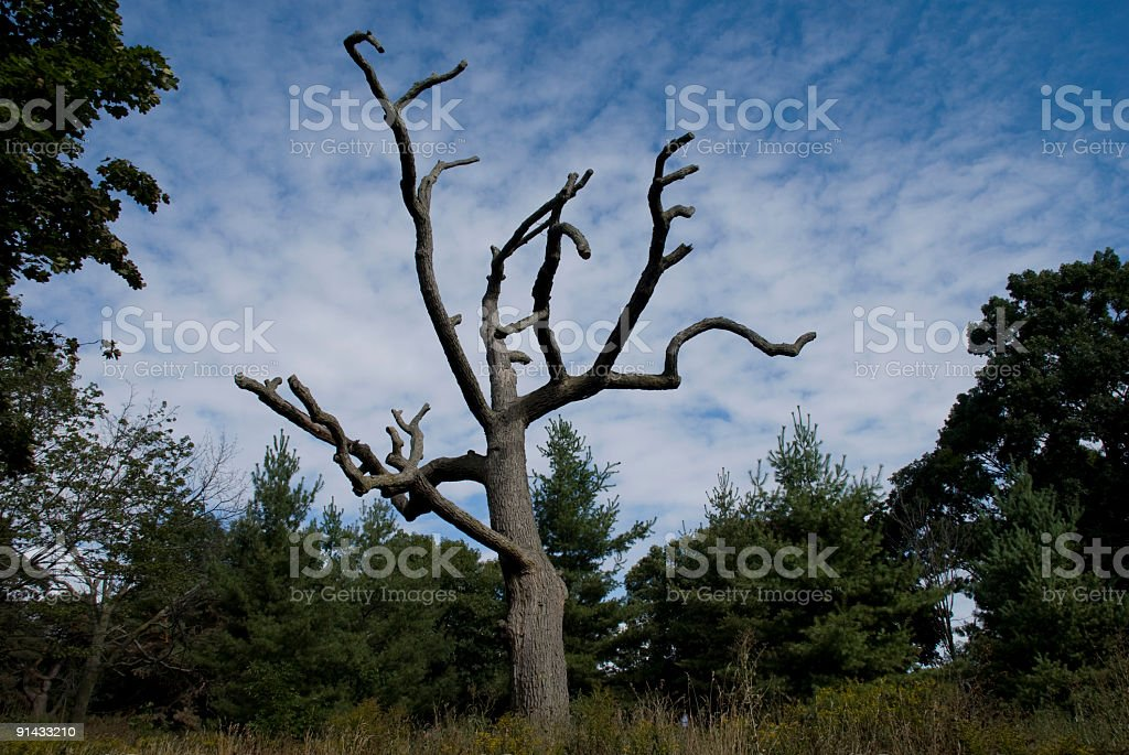 Craggy Tree royalty-free stock photo