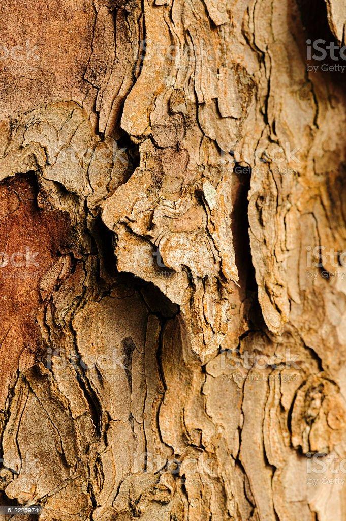 Craggy tree trunk stock photo