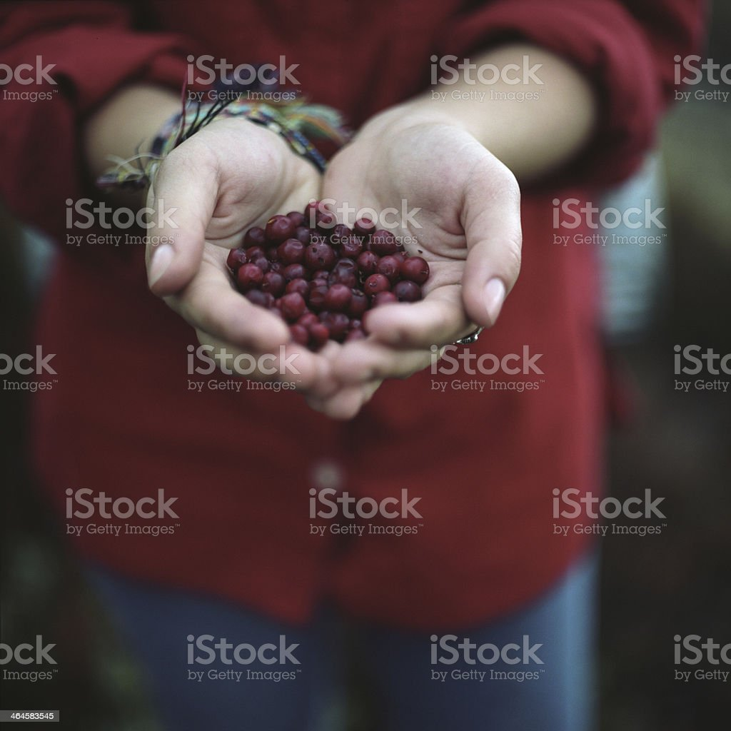 cranberries in carpathian mountains royalty-free stock photo