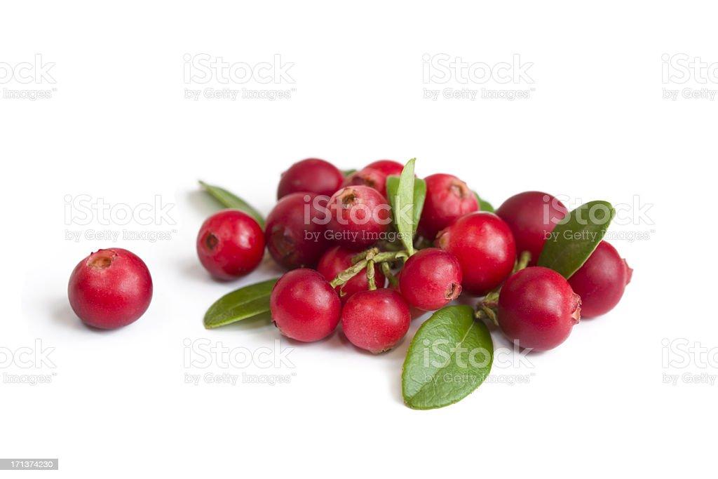 Cranberries on white stock photo