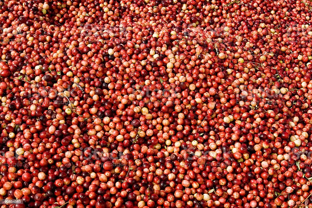 Cranberry pattern royalty-free stock photo