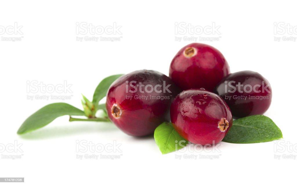 cranberry stock photo