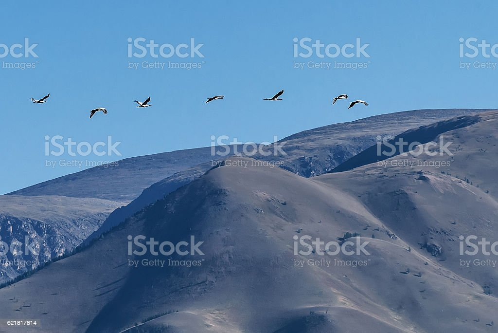 crane fly sky bird flock stock photo