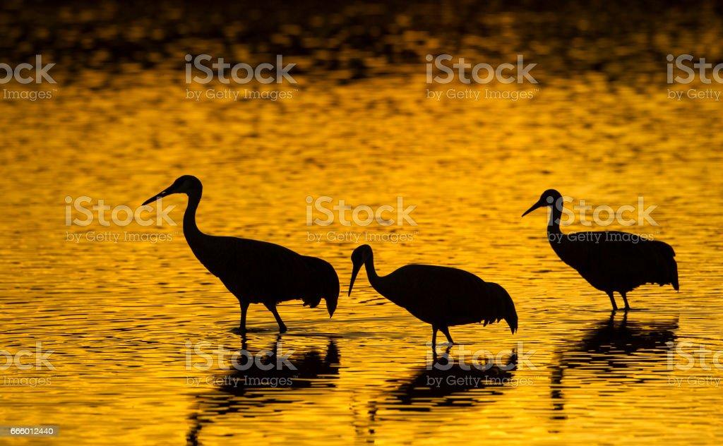 Cranes And Sunrise stock photo