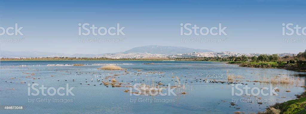cranes, beautiful in nature animal photograph stock photo