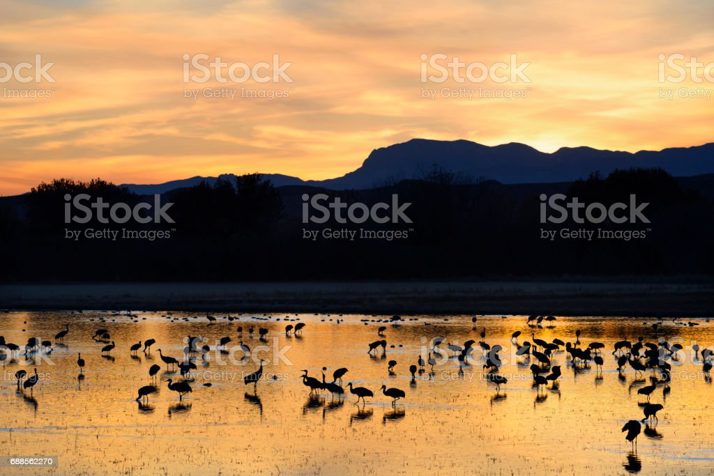 Cranes in Pond at Sunset with Colorful Sky stock photo