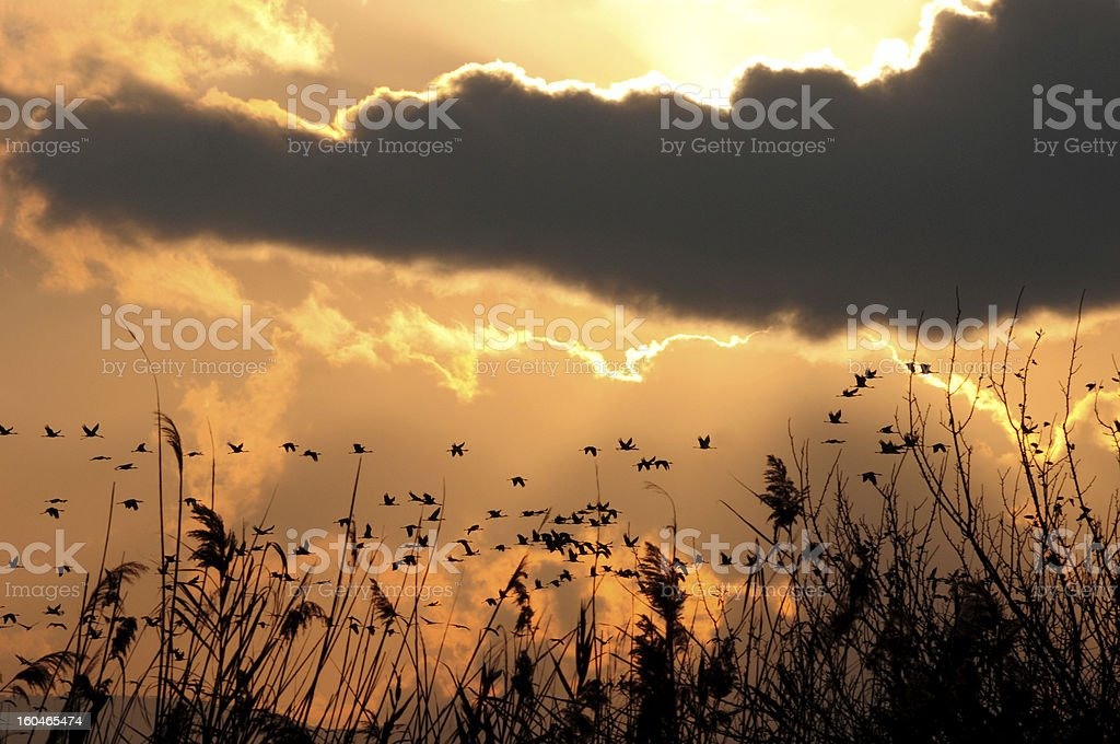Cranes migrating through Hahula Valley, Israel royalty-free stock photo