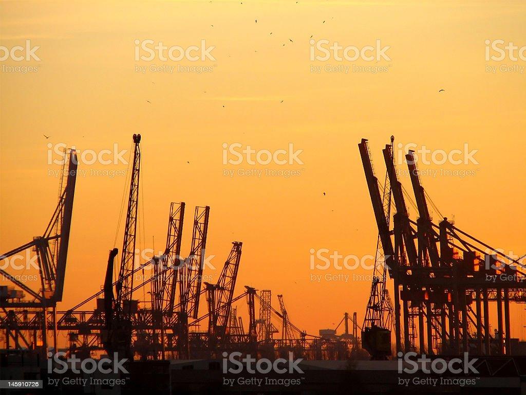 cranes stock photo