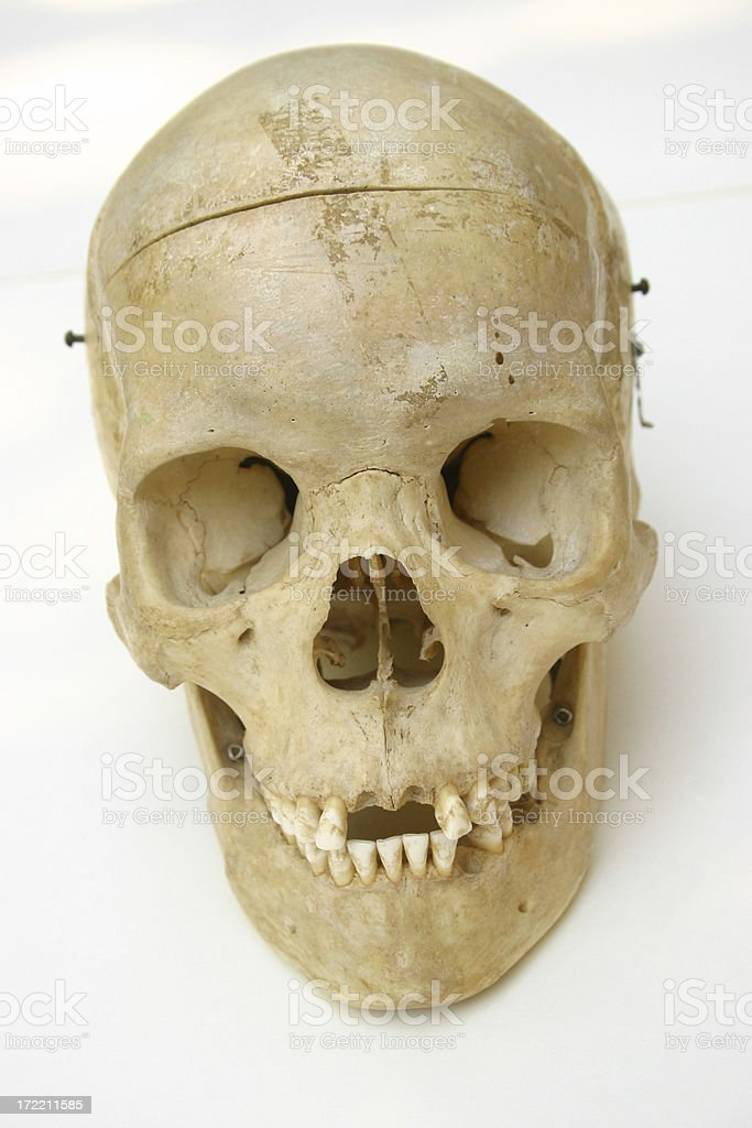 Cranium II stock photo
