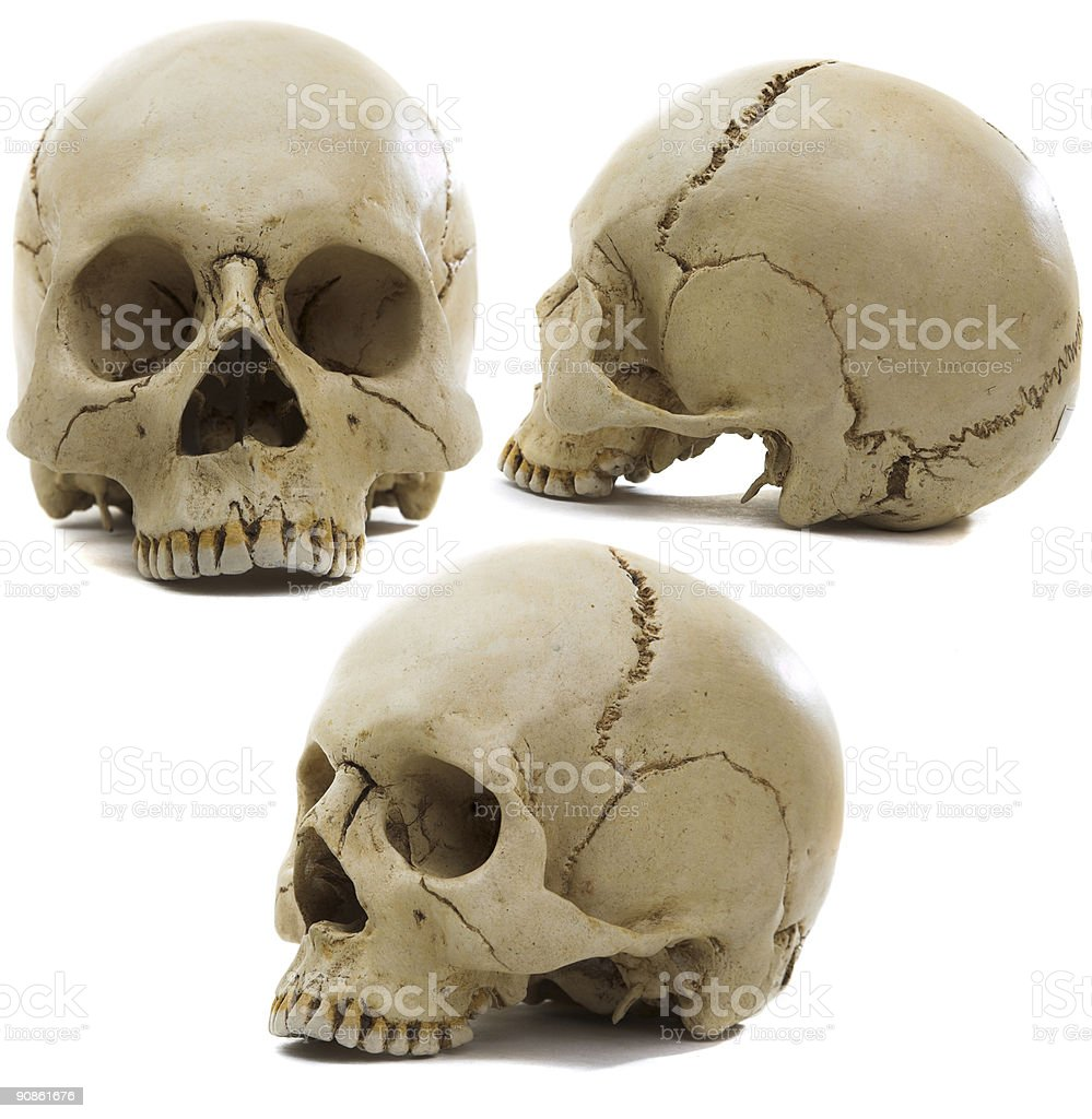 craniums royalty-free stock photo