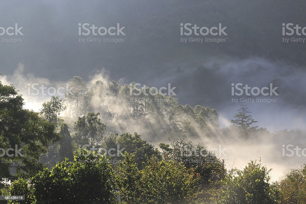 mist in forest , Chiang Mai royalty-free stock photo