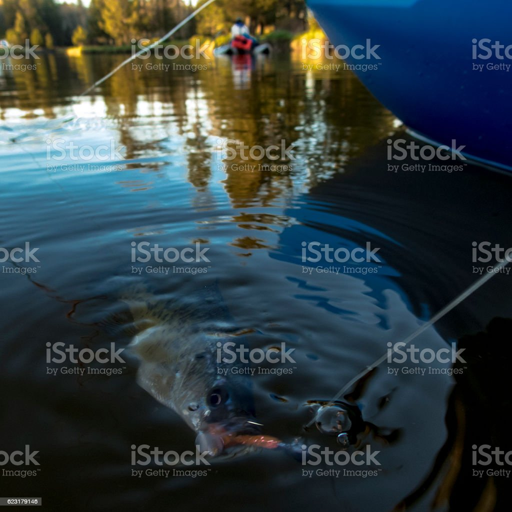Crappie Hooked Jig in Mouth Sunfish Boat with Woman Background stock photo