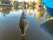 Crappie Sunfish Hooked Jig in Mouth Boat with Woman Background