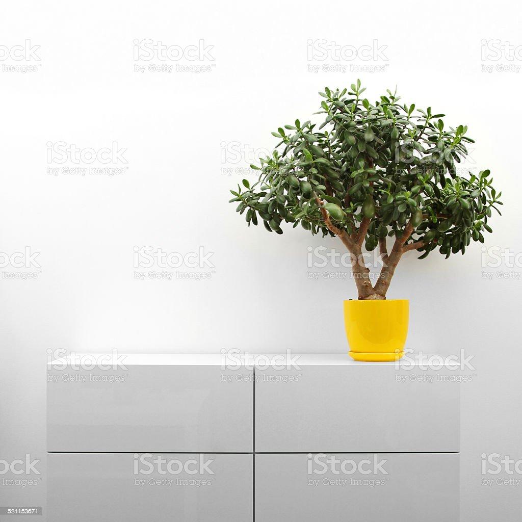 crassula plant on white commode stock photo