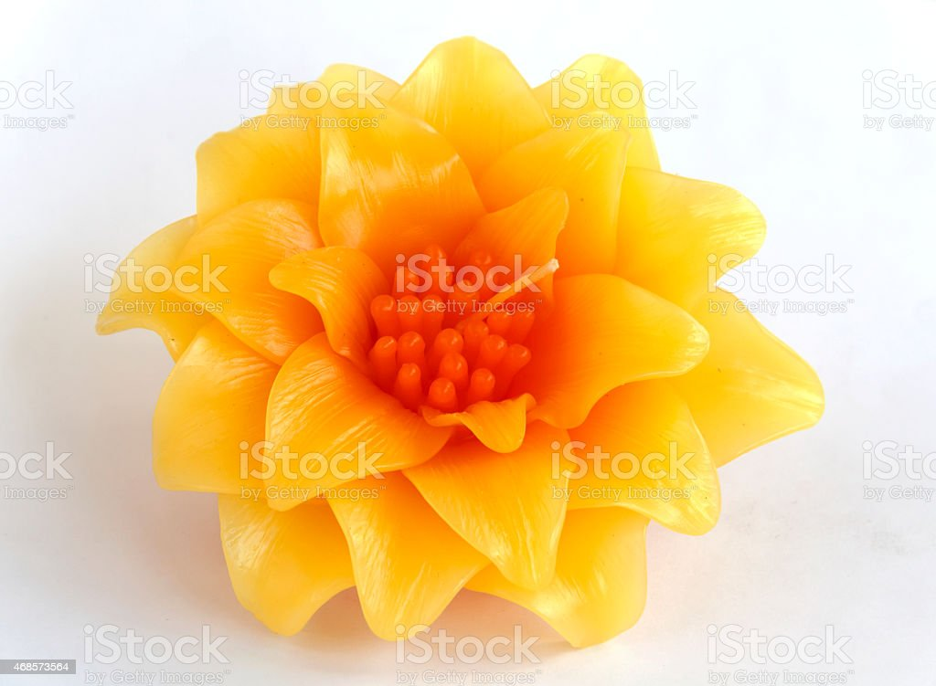 Crassulaceae candle flower royalty-free stock photo