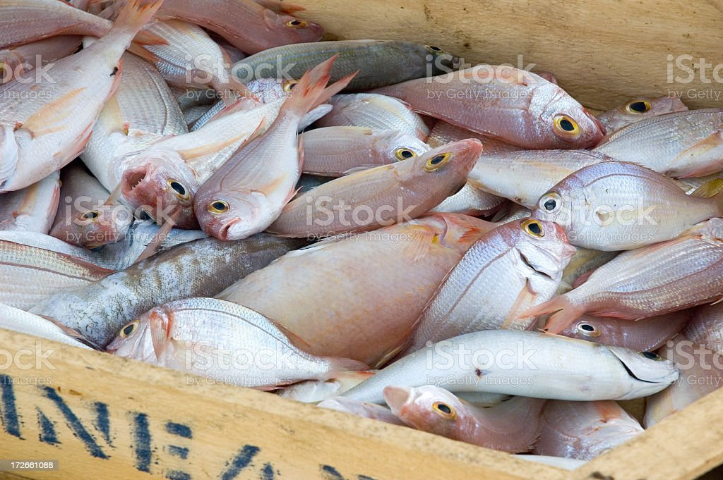 Crate full of morning catch fish royalty-free stock photo