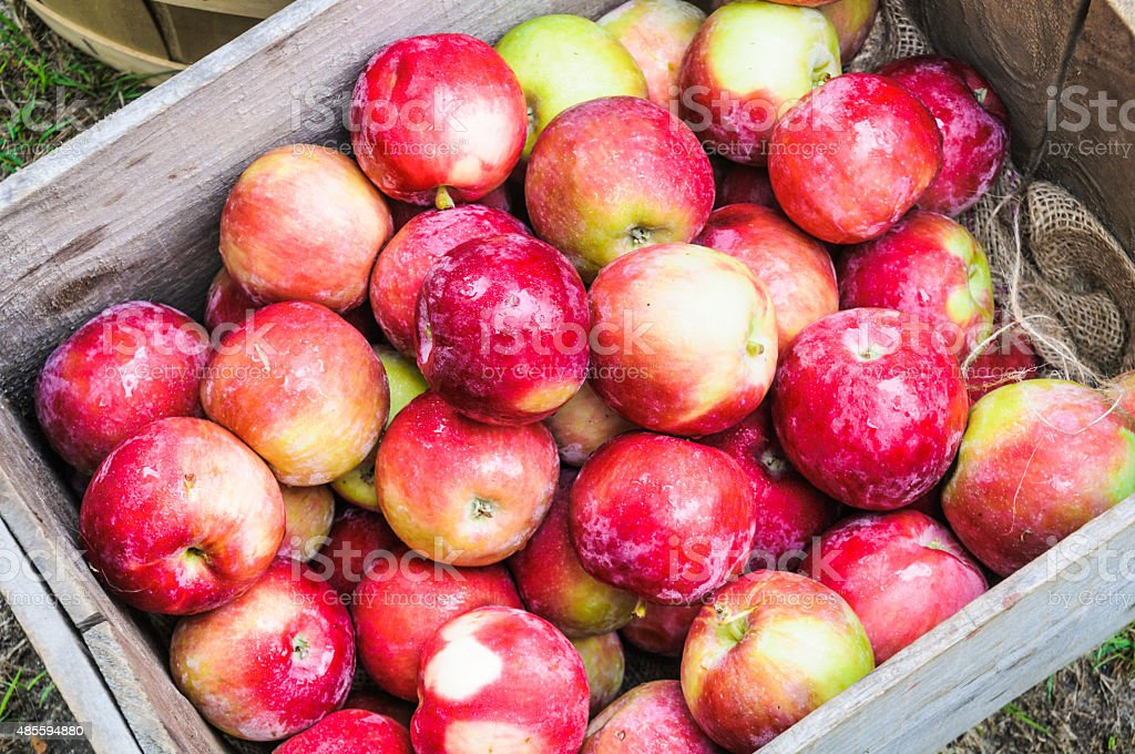 Crate of Apples stock photo