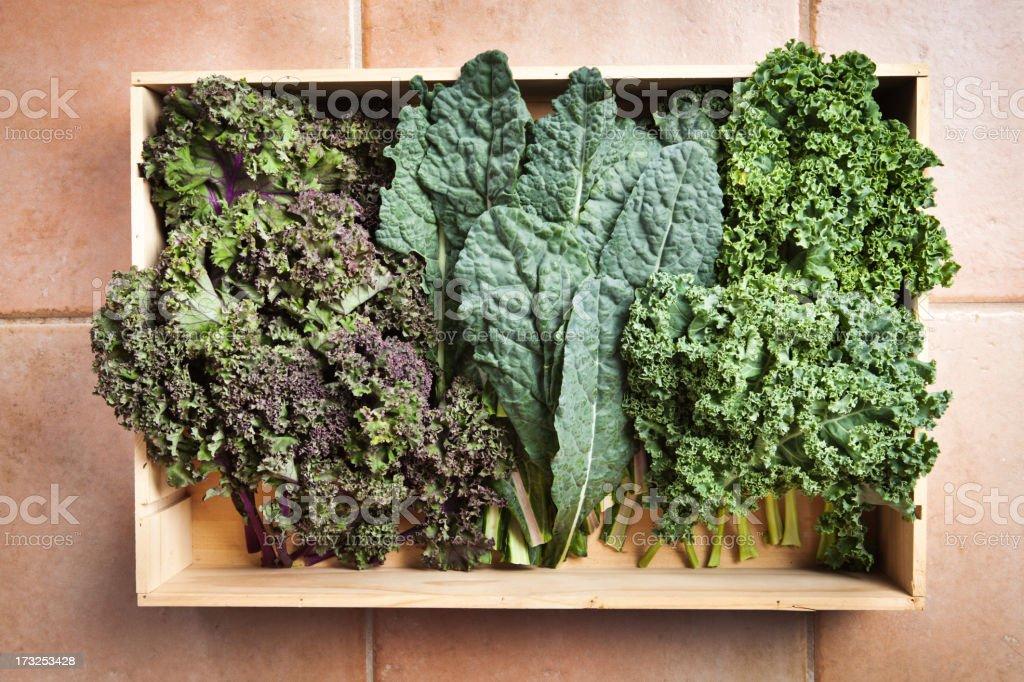 Crate of Freshly Harvested Kale Vegetable Varieties Hz stock photo