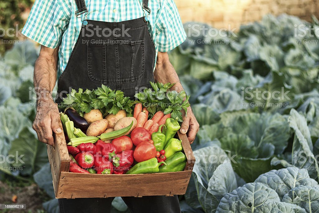 Crate with vegetables royalty-free stock photo