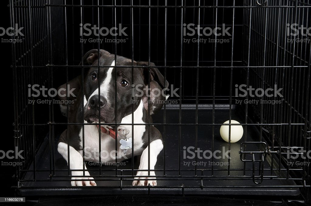 Crated Dog stock photo