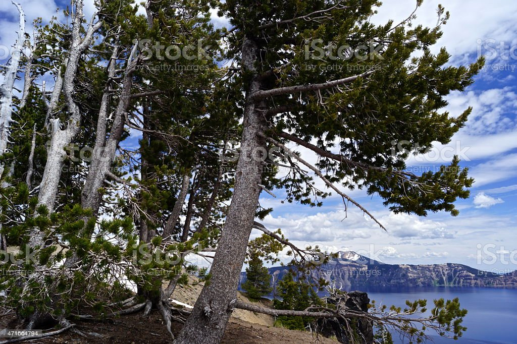 Crater Lake Pines stock photo