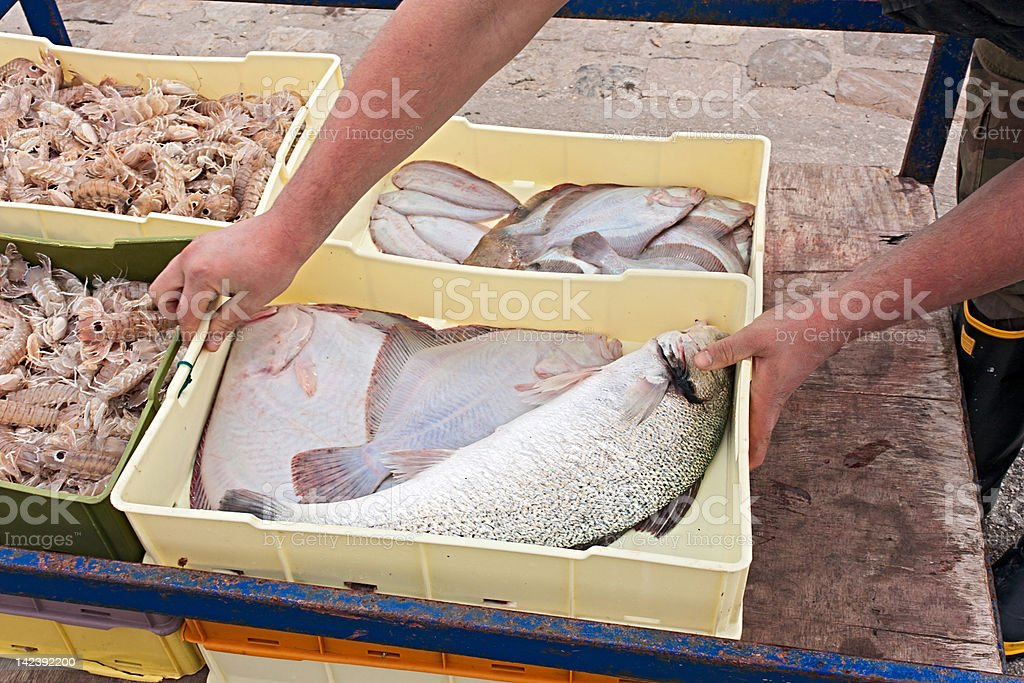 crates of freshly caught fish royalty-free stock photo
