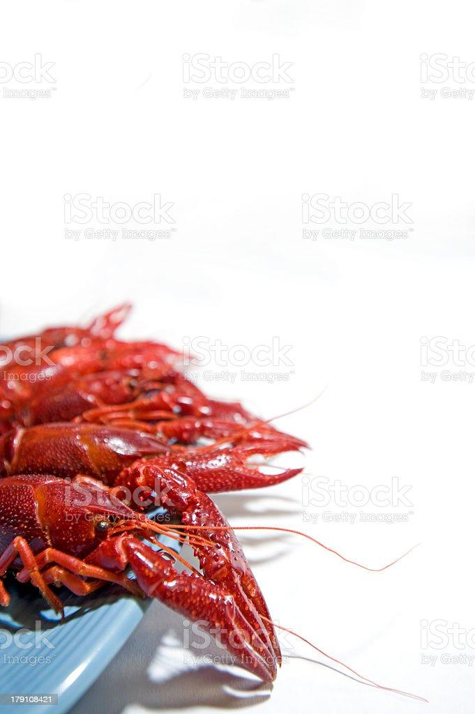 Crawdads on a blue plate stock photo