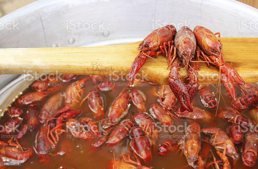 Crawfish Boil with Three Crayfish on Wood Paddle stock photo