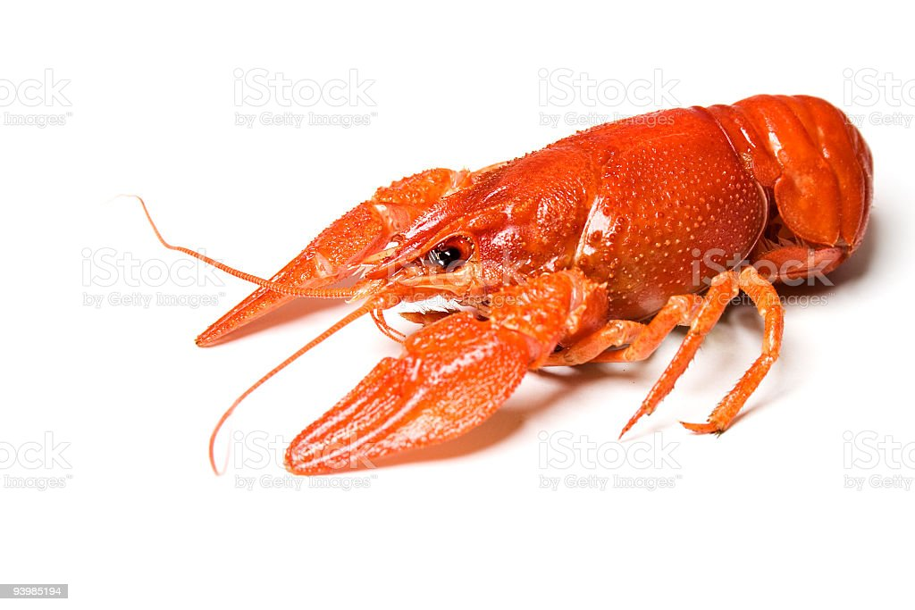 Crawfish royalty-free stock photo