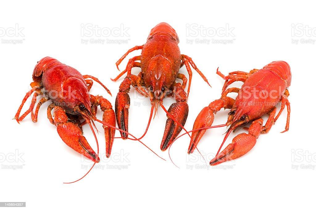 Crawfishes royalty-free stock photo