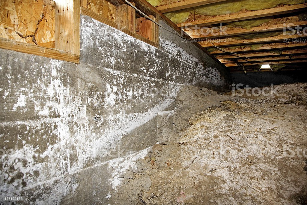 Crawl Space Mold Side stock photo