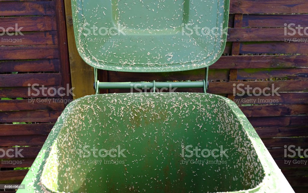 Crawling maggots from a compost bin stock photo