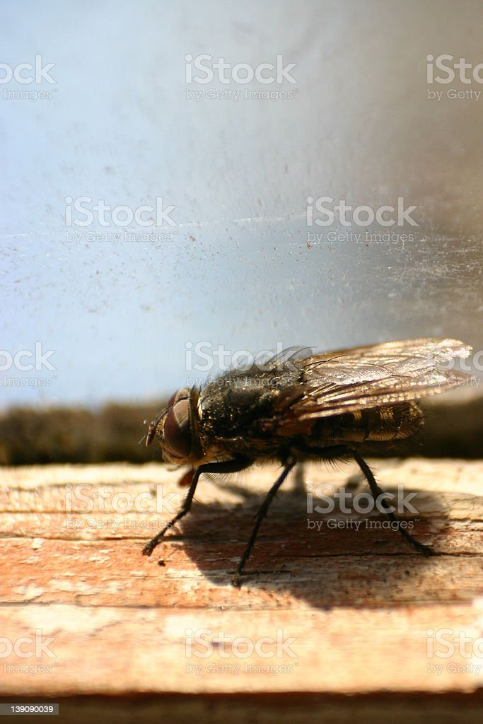 Crawling flie #2 royalty-free stock photo