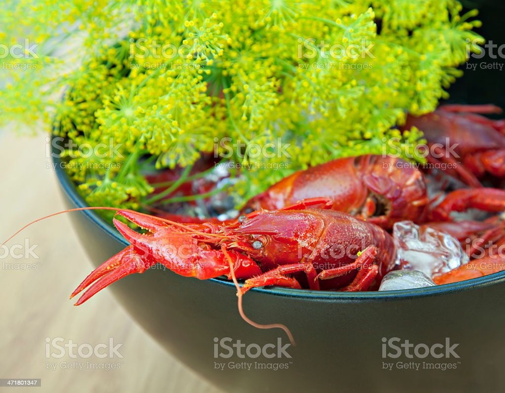 Crayfish and dill royalty-free stock photo