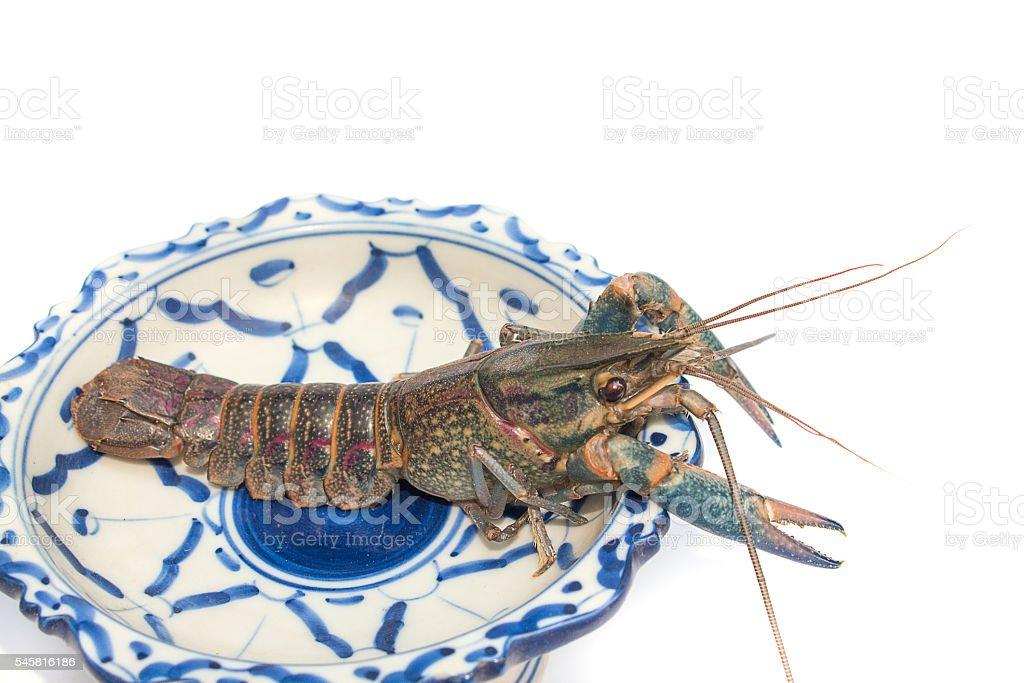 crayfish Cherax quadricarinatus stock photo