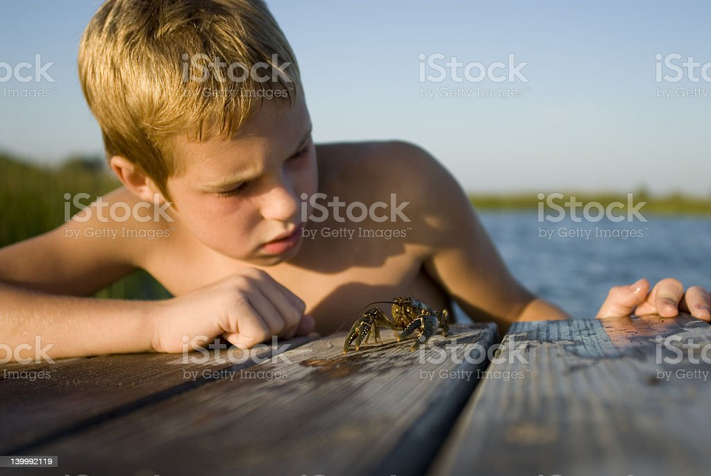 Crayfish Examination royalty-free stock photo
