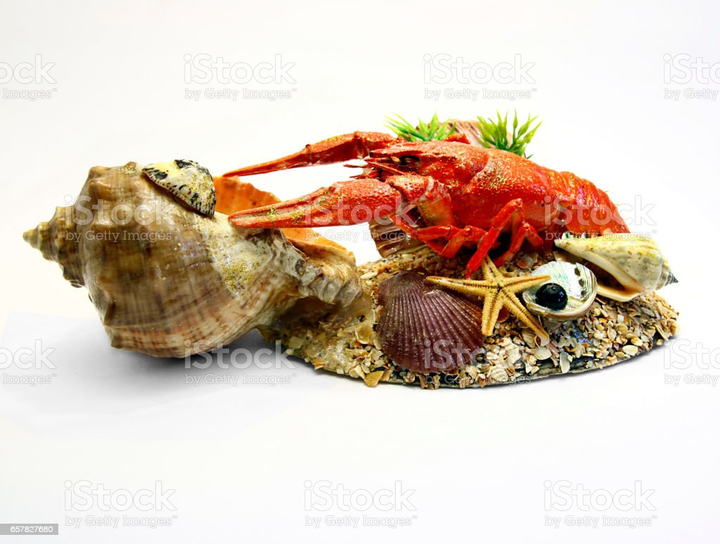 crayfish hack with seashells isolated stock photo