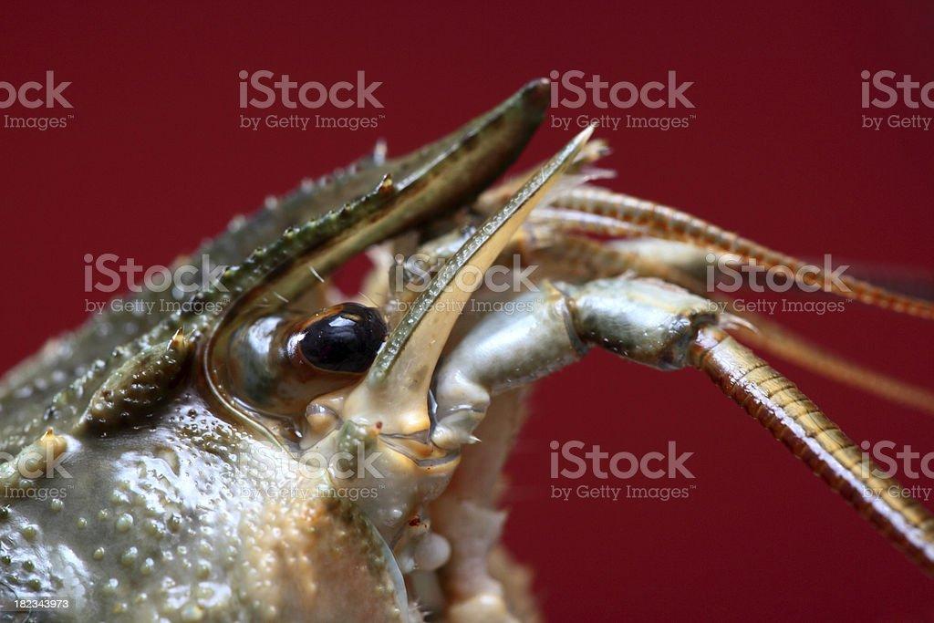 Crayfish head royalty-free stock photo